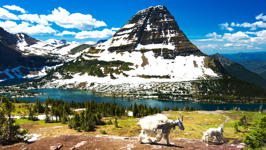 View of mountain goats at Glacier National Park